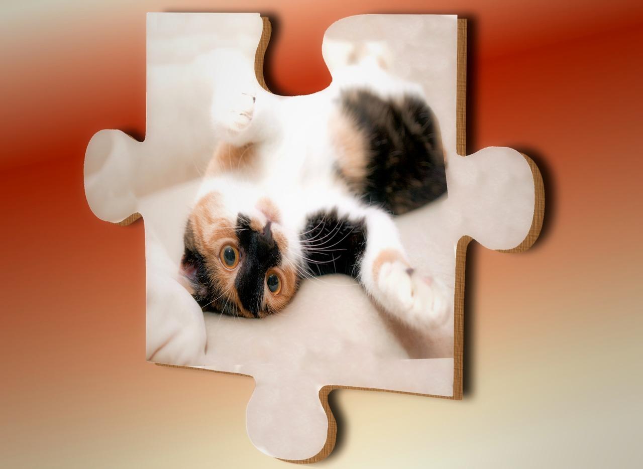 cat-on-puzzle